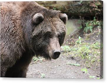 Canvas Print featuring the photograph Grizzley - 0021 by S and S Photo