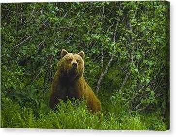 Grizzly Bear Alaska Canvas Print