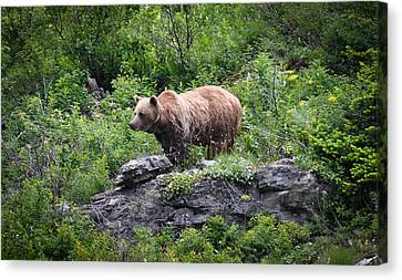 Canvas Print featuring the photograph Grizzly by Ronda Broatch