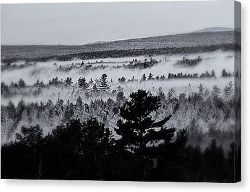 Ground Fog Canvas Print by Susan Capuano