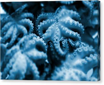 Group Of Octopuses Canvas Print by Victor Habbick Visions