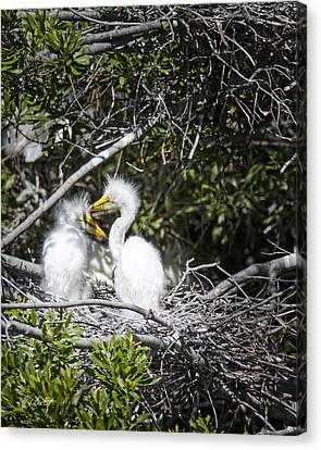 Growing Nestlings Canvas Print by Phill Doherty