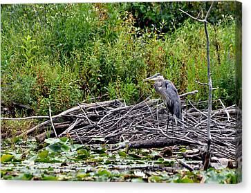 Guarding The Nest Canvas Print by Larry Hutson Jr