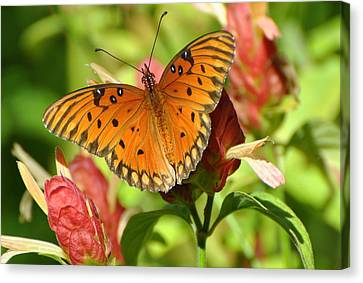 Canvas Print featuring the photograph Gulf Fritillary Butterfly On Flower by Jodi Terracina