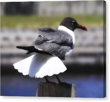 Gull Dance Canvas Print by Linda Dunn