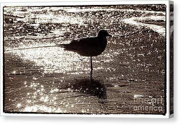 Canvas Print featuring the photograph Gull In Silver Tidal Pool by Jim Moore