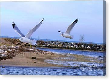 Gulls In Flight 2 Canvas Print