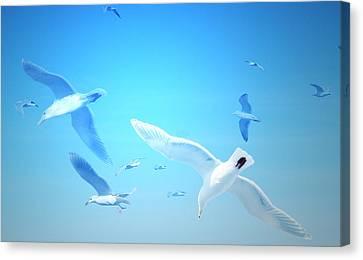 Gulls In Flight Canvas Print by Michele Cornelius