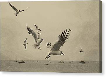 Canvas Print featuring the photograph Gulls by Linsey Williams