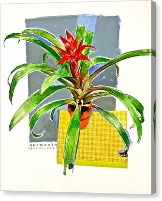 Guzmania  Canvas Print by Cliff Spohn