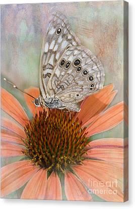 Hackberry Emplorer Butterfly Canvas Print by Betty LaRue
