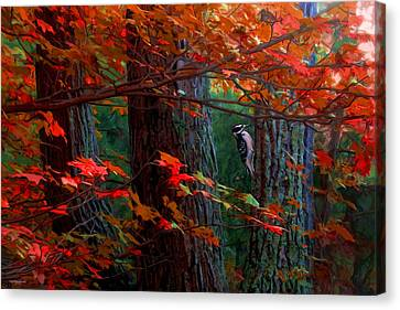 Hairy Woodpecker Canvas Print by Ron Jones