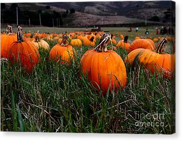 Halloween Pumpkin Patch 7d8405 Canvas Print by Wingsdomain Art and Photography