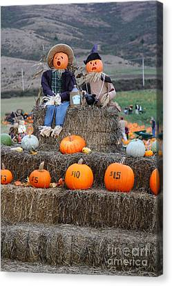 Halloween Pumpkin Patch 7d8476 Canvas Print by Wingsdomain Art and Photography