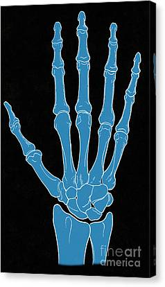 Hand And Wrist Bones Canvas Print by Science Source