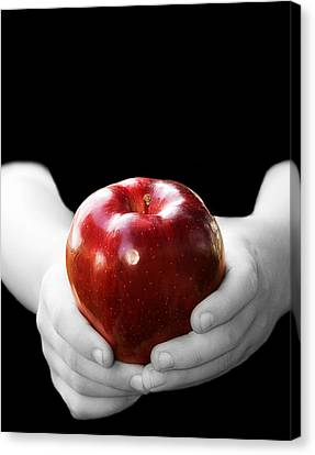 Hands Holding Apple Canvas Print by Trudy Wilkerson