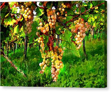 Hanging Grapes On The Vine Canvas Print