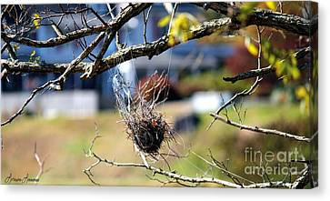 Hanging On Canvas Print by Lorraine Louwerse