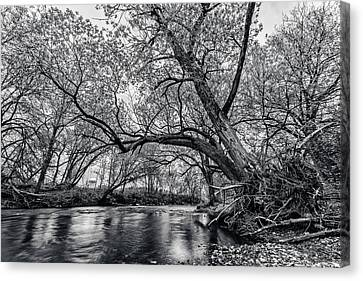 Hanging Over Me Canvas Print by CJ Schmit