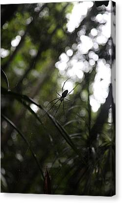 Hanging Spider Canvas Print