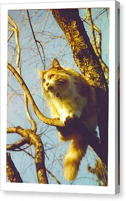Hanserelli In Tree Canvas Print