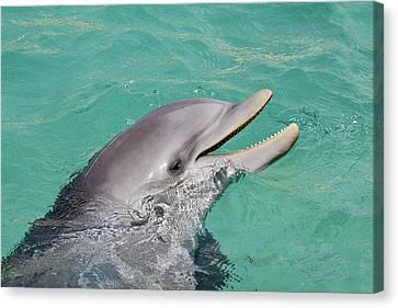 Happy Atlantic Bottlenose Dolphin Canvas Print by Dave Fleetham