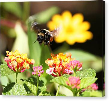 Canvas Print featuring the photograph Happy Bee by Luana K Perez
