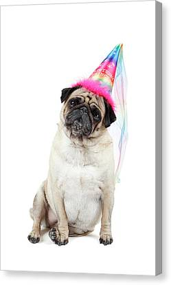 Happy Birthday Canvas Print by Mlorenzphotography