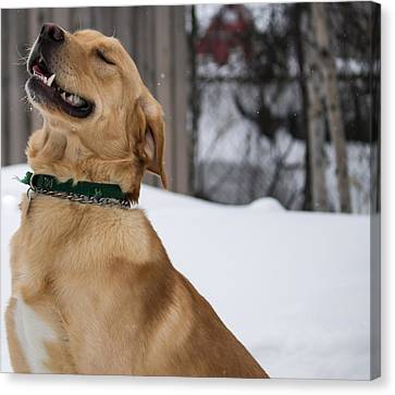 Happy Happy Doggie Canvas Print