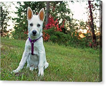 Canvas Print featuring the photograph Happy Puppy by Tyra  OBryant