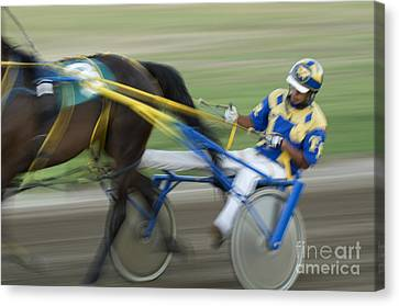 Harness Racing 2 Canvas Print by Bob Christopher