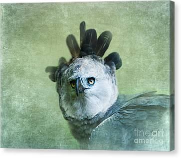 Harpy Eagle Portrait Canvas Print