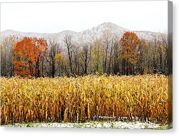 Harvest Snow Canvas Print by Carolyn Postelwait