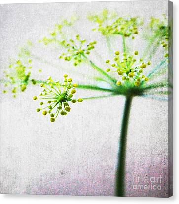 Harvest Starburst 2 Canvas Print
