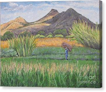 Harvesting In Yagul Canvas Print by Judith Zur