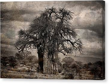 Haunted African Baobabs Tree Canvas Print by Jess Easter