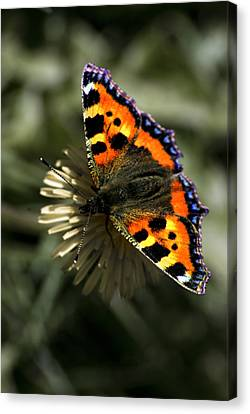 Canvas Print featuring the photograph Having A Rest by John Chivers