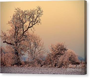 Frost 2 Canvas Print by Linsey Williams