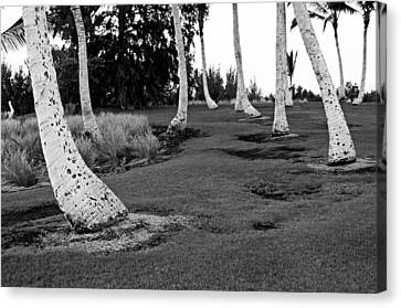 Hawaii Palms Canvas Print by James Steele