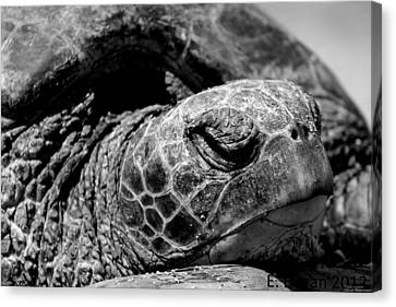 Canvas Print featuring the photograph Hawaiian Basking Turtle by Elizabeth  Doran