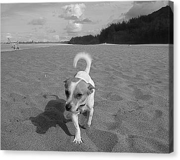 Canvas Print featuring the photograph Hawaiian Beach Dog by Blake Yeager