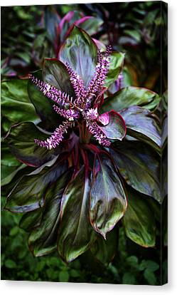 Hawaiian Good Luck Plant Canvas Print