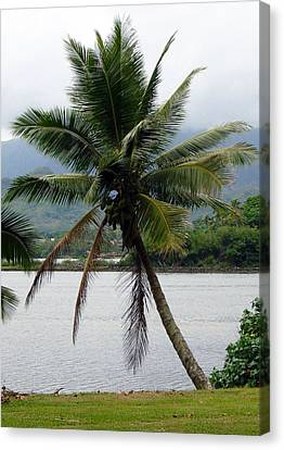 Canvas Print featuring the photograph Hawaiian Palm by Athena Mckinzie