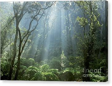 Hawaiian Rainforest Canvas Print by Gregory Dimijian MD