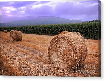 Hay Bales At Sunrise Canvas Print by HD Connelly