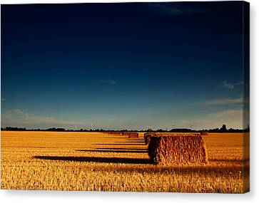 Hay Bales Canvas Print by Cale Best