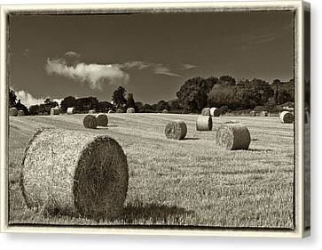Hay Bales In Sepia Canvas Print