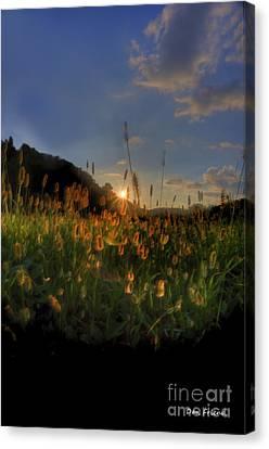 Hay Field Canvas Print by Dan Friend