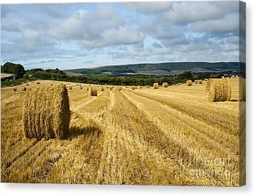 Hay Field Canvas Print by Donald Davis