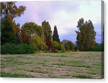 Hay Field Guardians Canvas Print by Pamela Patch